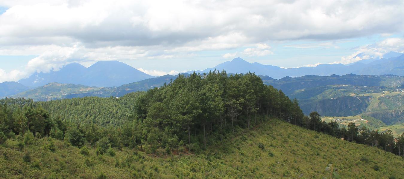 Hållbart skogsbruk i Guatemala