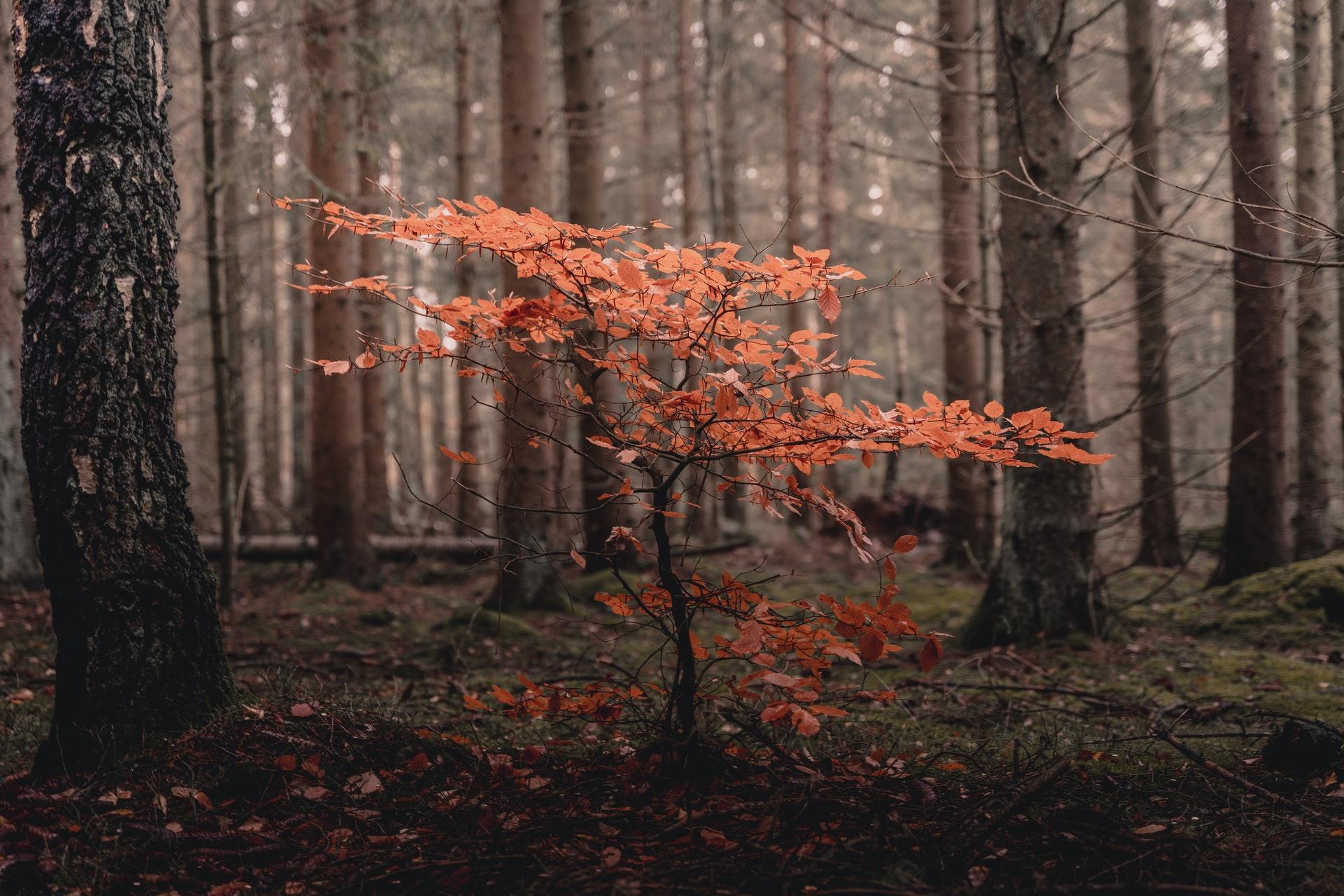 Oktoberskog